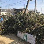 堆肥作り進捗状況