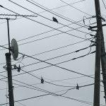 【糞害・鳥対策】東京電力の電線に鳥よけを設置してもらう