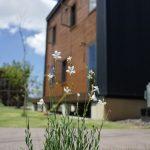 宿根・多年草を安く手に入れる方法