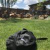 セフティー3 ガーデンスパイク SL-4をカスタマイズしたらエアレーション捗りすぎ|材料費0円&作業時間10分!