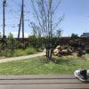 週一で芝刈りシーズン突入|軸刈り注意