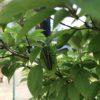 水やりのみで庭木をキレイに保つコツ|GARDEN FRIENDS 散水ノズル メタル10 SMG-10使用