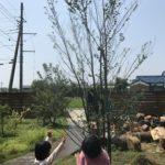 庭仕事が暑過ぎだったので庭木を利用してミストを撒きました|庭でミストを撒く方法