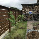 真夏にカツラ(桂)三本を庭に植え付け
