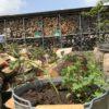 【ミントテロ注意】スペアミント栽培に再度挑戦|ミントウォーター