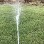 【芝生】熊手やレーキを使わず散水時にサッチ除去する方法