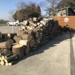 お寺で伐採した松を頂きました