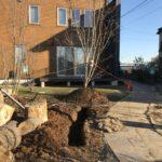 【水はけ改善】庭の中心部に暗渠排水DIY工事②|野良猫が庭でジャレだす