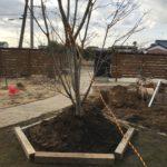 【要水鉢】高植えした庭木に水やりすると土が流れる件