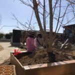 【庭木土流出防止】シンボルツリーの囲い兼レイズドベッドを作りました【水はけ改善】