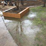 暗渠排水工事後まとまった雨が降ったので効果を確認しました