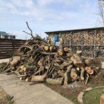 【薪活】ハズレ原木(檜、楠)を回収に行きました【軽トラ6杯分】