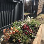 DIYしたウッドプランターに春の花を植え付けました