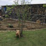 庭で犬がオシッコして帰った件