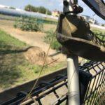 【恐ロシア】ヤブカラシ、立てかけた草刈り機にあっという間に絡みつく