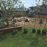 庭木を一気に6本植え付ける|月桂樹、ニシキギ、フェイジョア、クラブアップル