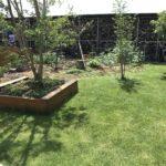 【高麗芝】芝を3週間ぶりに刈りました