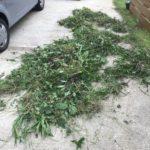 まとまった雨の後って雑草の伸び率半端ないよね|我が家流抜いた雑草を枯らす方法