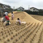 【堆肥】実家からもみ殻と米ぬかをもらった件