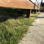 【芝生】砂利だったウッドフェンス下でターフ形成中