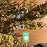 台風塩害の影響で今シーズンはモミジの紅葉を楽しめず