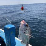 【鹿島沖海釣り】エビで鯛を釣ってきました(紅牙タイテンヤSS 5号 ケイムラ使用)