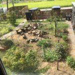 【閲覧注意】庭でモグラが死んでた件