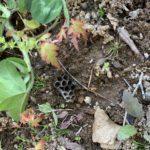 ヤマモミジにハチの巣があったので駆除した件