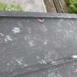 【定期点検】ワンダーデバイス屋根上でザリガニが散乱