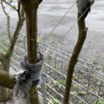 境界沿いの庭木をステンレスワイヤーで敷地内に寄せたい件